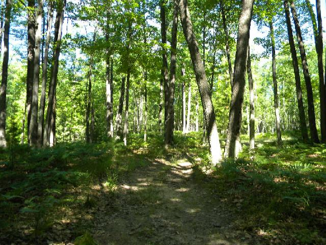 https://secure-forwarder.pl-internal.com/responder/photos.listhub.net/RFGC21/FLM27F/2?lm=20180629T072858